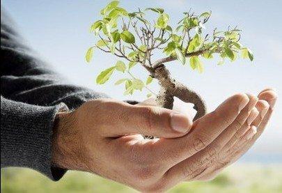 Environmental Groups
